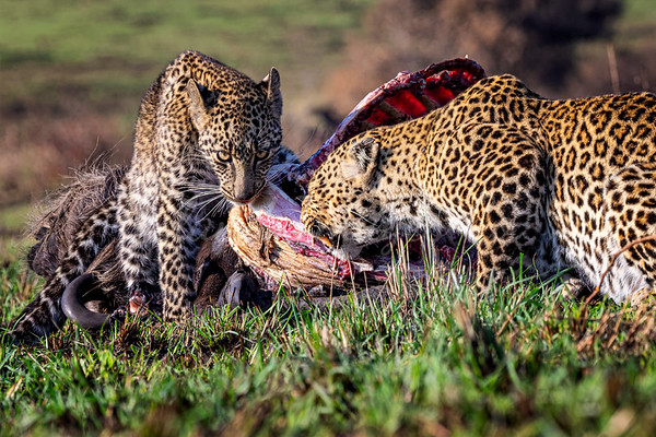 Sharing a meal