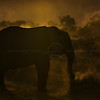 Backlit African elephant