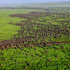 Serengeti Migration-2