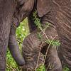 Baby Elephant Steps