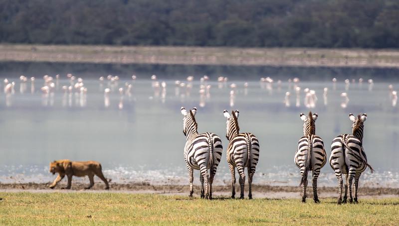 Ngorongoro-751