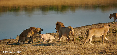 Tension at the Waterhole