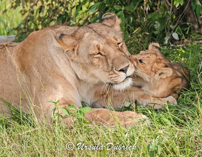Kiss for mom - Kenya