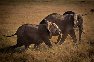 Mother and Baby Elephant, Kenya