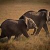 Mother and Baby Elephant, Kenya