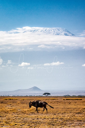 Wilby with Kilimanjaro