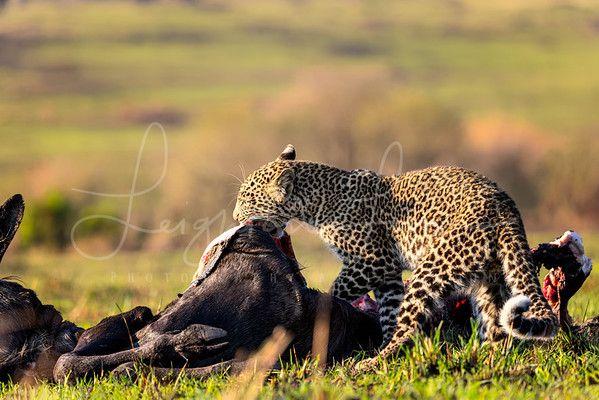 Cub and his meal 2