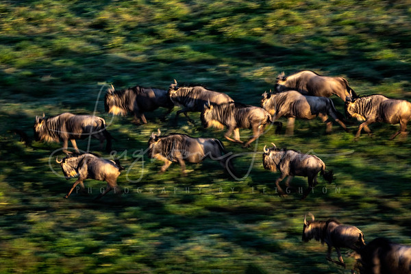 Motion Blur great migration