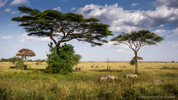 A peaceful afternoon in Serengeti