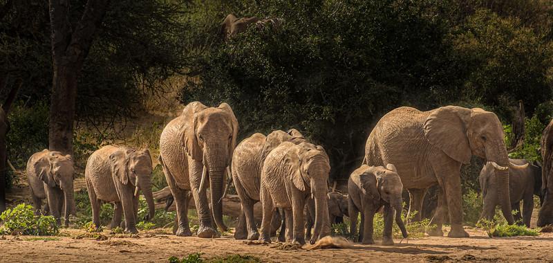Samburu-852