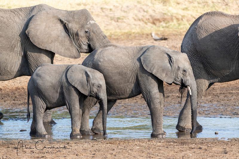 Elephant sizes