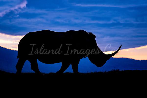 Rhino Sillouette 2