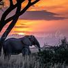 Sunsets in Amboseli