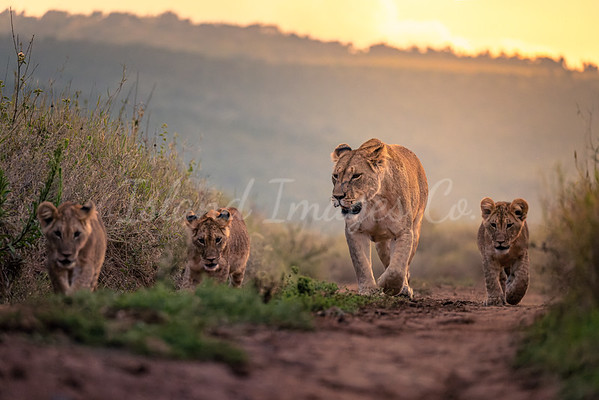 Mom and her cubs