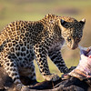 Cub and his meal