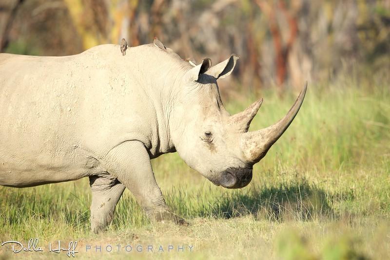 On safari in Lake Nakuru National Park, Kenya.
