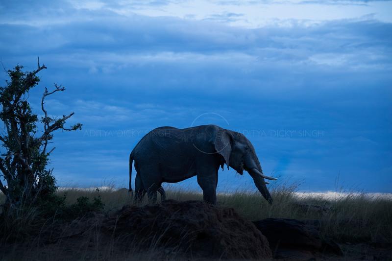 African elephant silhouetted against blue skies in Masai Mara Wildlife Refuge in Kenya