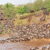 Wildebeest (or wildebeest, wildebeests or wildebai, gnu) herds crossing the Mara river in Masai Mara, Kenya, Africa
