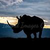 Rhino Sillouette