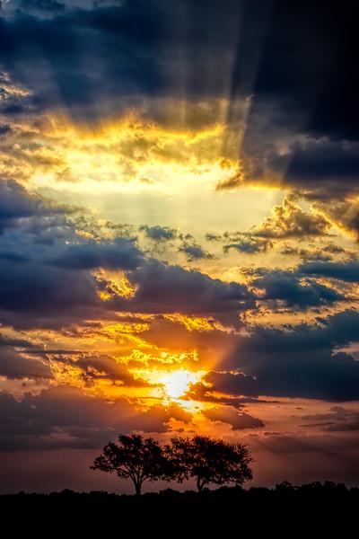 Window to heaven. S Luangwa National Park