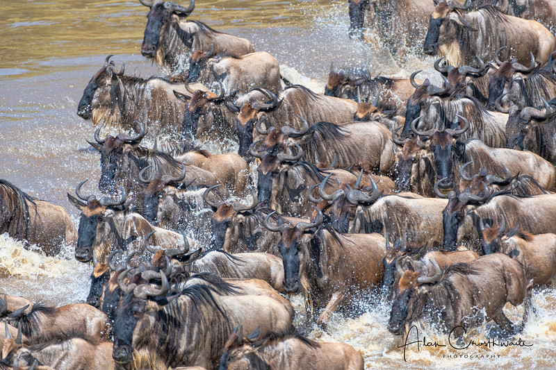 Crossing of the Wildebeest
