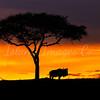 Mara sunsets