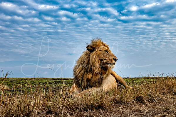 Day in the Mara