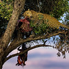 Leopard in the trees