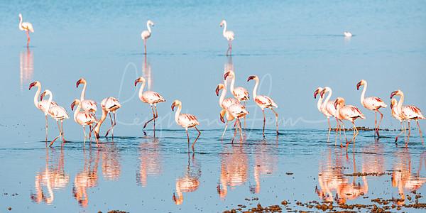 Flamingo 1x2