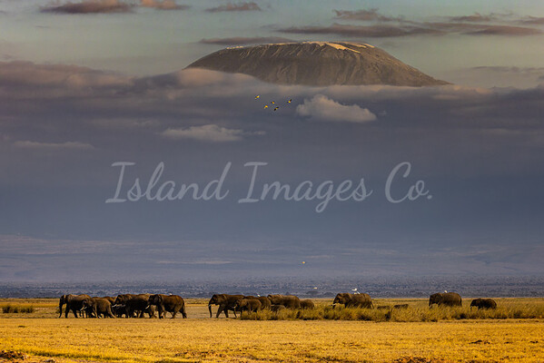 Heard under Kilimanjaro