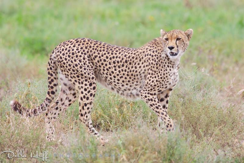 On safari in Serengeti National Park, Tanzania.