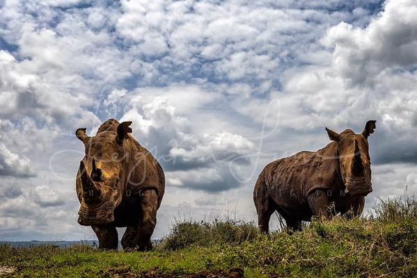 Rhino Boys Club 2