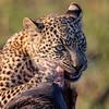 Leopard cub portrait 2