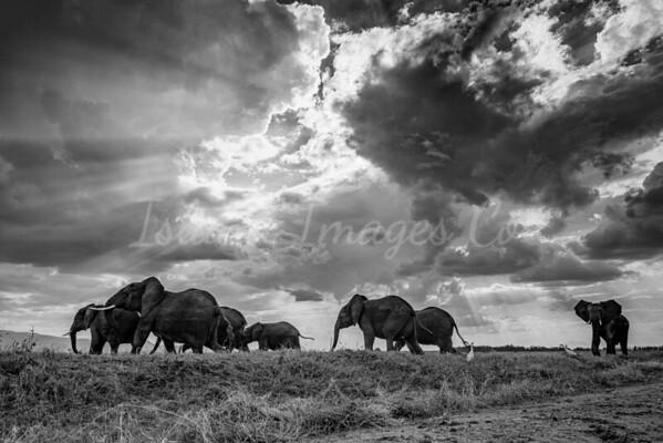 Sunrays and Elephants