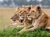 Maasai Mara-2609-Edit-B