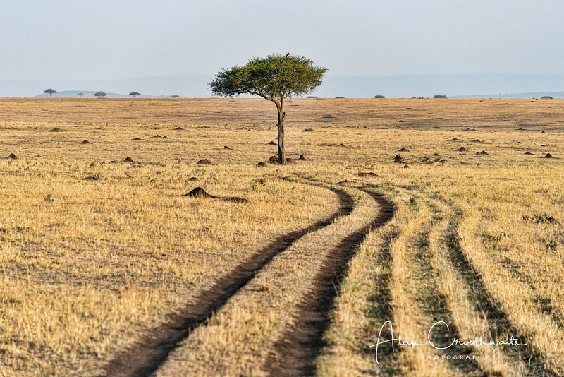 Road through the Serengeti