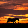 Sunsets in the mara