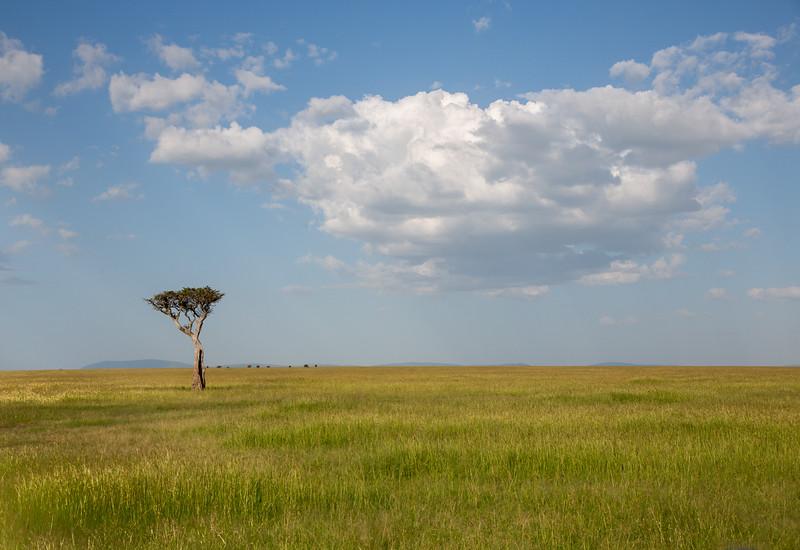 Maasai Mara-1340
