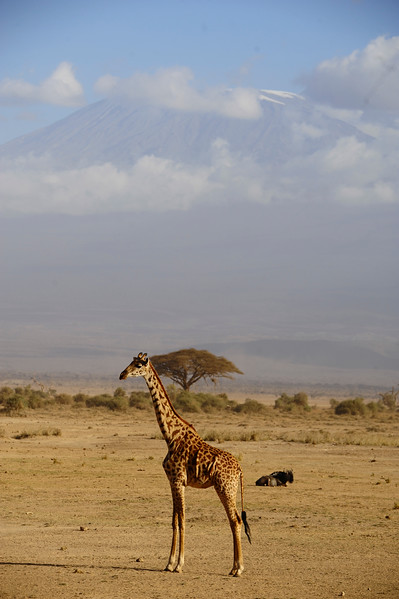 THE GREAT KILIMANJARO