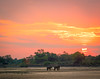 Elephant sunset. S Luangwa National Park