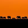 Elephant parade_