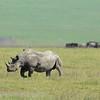 On safari in Ngorongoro Crater, Tanzania.