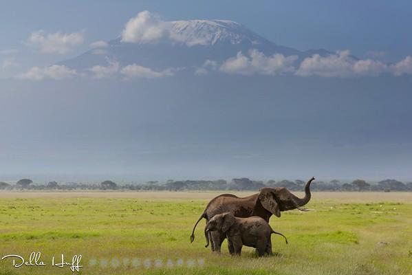 On safari in Amboseli National Park, Kenya.