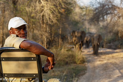 Colin with Kirkman's Elephants