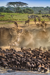 The Great Migration, Crossing the Mara