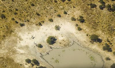 Giraffe and Impala at Drying Waterhole
