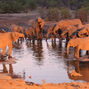 Elephants in a waterhole