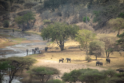 Elephants in the Tarangire National Park