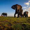 The Matriarch Elephant