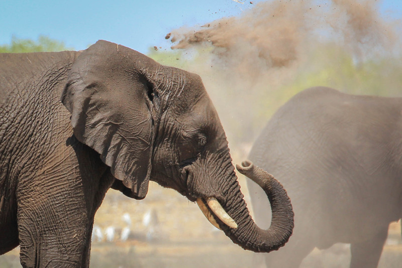 Elephant dirt bath
